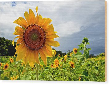Sunshine On A Cloudy Day Wood Print by AnnaJo Vahle