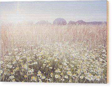 Sunshine Over The Fields Wood Print by Natalie Kinnear