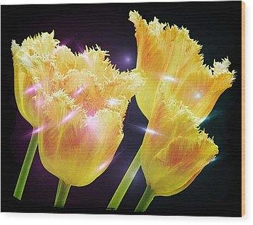 Sunshine Tulips Wood Print by Debra  Miller