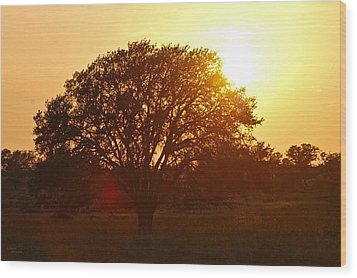 Suntree Wood Print by Teresa Dixon