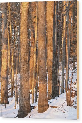 Sunwarmed In Winter Wood Print by Melissa Stoudt