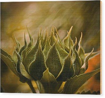 Super Sunflower Wood Print