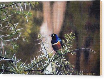 Superb Starling Wood Print