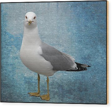 Superior Seagull Wood Print