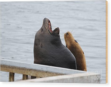 Supersized Sea Lion And Friend Wood Print
