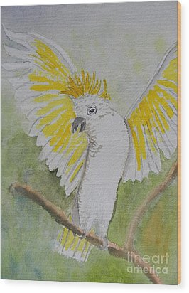 Suphar Crested Cockatoo Wood Print by Pamela  Meredith