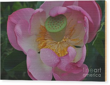 Supreme Lotus Wood Print