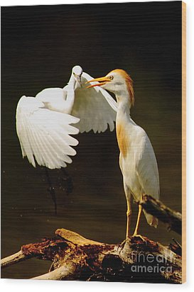 Suprised Cattle Egret Wood Print by Robert Frederick
