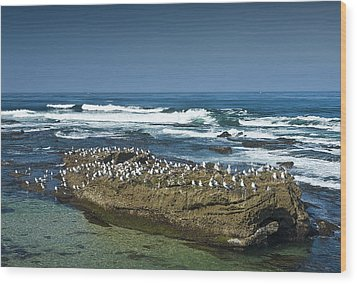 Surf Waves At La Jolla California With Gulls Perched On A Large Rock No. 0194 Wood Print by Randall Nyhof