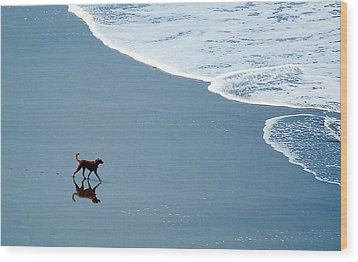 Surfer Dog Wood Print by AJ  Schibig