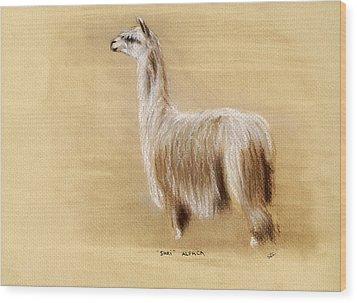 Suri Alpaca Wood Print by Sara Cuthbert