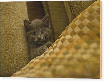 Surprised Kitten Wood Print by Matt Radcliffe