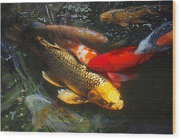 Wood Print featuring the photograph Surreal Fishpond by Adria Trail
