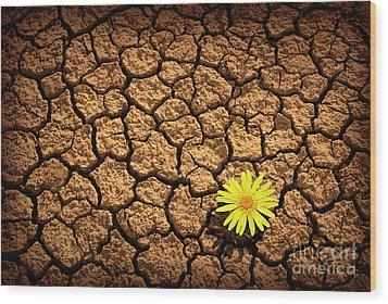 Survivor Wood Print by Carlos Caetano