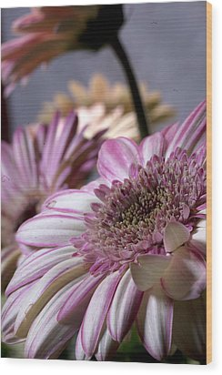 Wood Print featuring the photograph Susan G Komen Daisy by Robert Camp