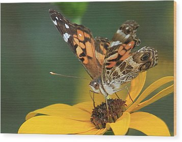 Susan Painted Lady Wood Print by Reid Callaway