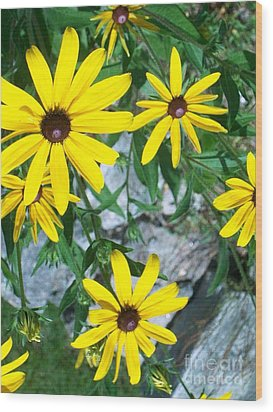 Wood Print featuring the photograph Susans by Joan Hartenstein