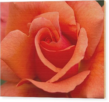 Suzanne's Rose Wood Print