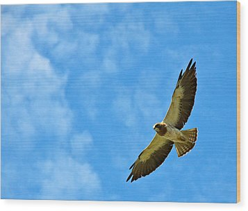 Swainson's Hawk Snake River Birds Of Prey Natural Conservation Area Wood Print by Ed  Riche