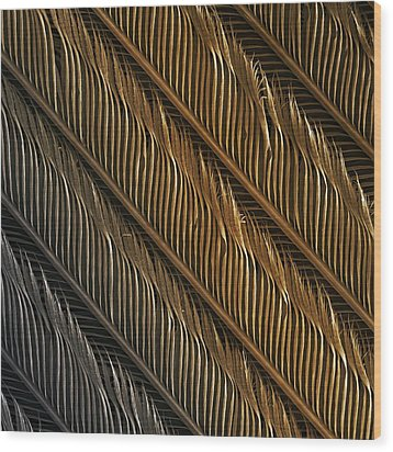 Swallow Feather Detail, Sem Wood Print by Power And Syred