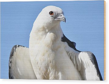 Swallow-tailed Kite Wood Print by Paulette Thomas