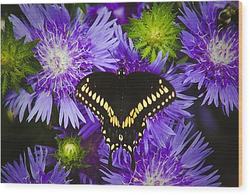 Swallowtail And Astor Wood Print by Debra Crank