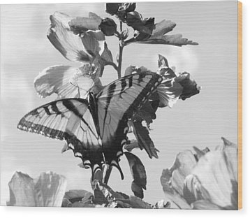 Swallowtail And Rose Of Sharon Bw Wood Print by Diannah Lynch