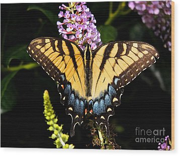 Swallowtail Beauty Wood Print by Eve Spring