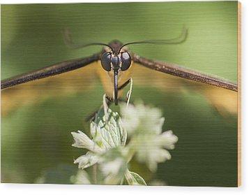 Swallowtail Butterfly Wood Print by Adam Romanowicz