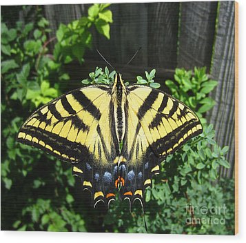 Swallowtail Butterfly Feeding Wood Print