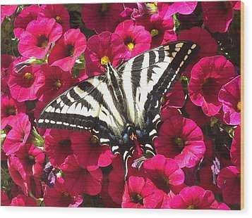 Swallowtail Butterfly Full Span On Fuchsia Flowers Wood Print
