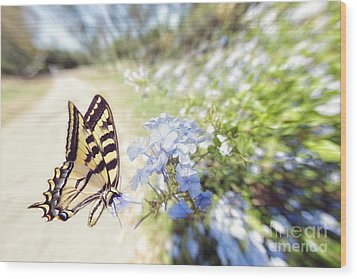 Swallowtail Butterfly In Spring Wood Print
