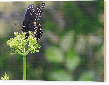Swallowtail Butterfly Wood Print by Lorri Crossno