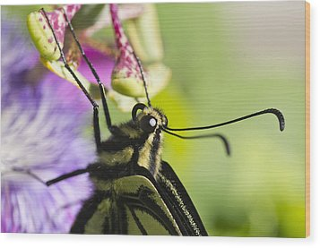 Swallowtail Butterfly Wood Print by Priya Ghose