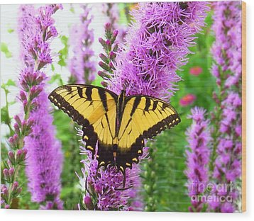 Swallowtail Butterfly Wood Print by Scott Cameron