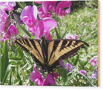 Wood Print featuring the photograph Swallowtail by Cheryl Hoyle