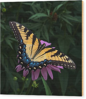 Swallowtail  Wood Print by Don Spenner