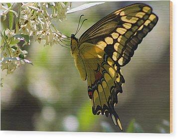 Swallowtail II Wood Print