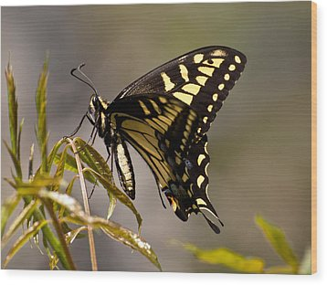 Swallowtail In Profile Wood Print