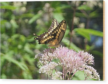 Wood Print featuring the photograph Swallowtail by Karen Silvestri