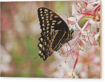 Swallowtail Wood Print by Linda Brown