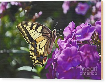 Swallowtail On A Flower Wood Print by Maja Sokolowska