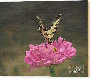 Swallowtail On A Zinnia Wood Print by Debby Pueschel