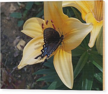 Wood Print featuring the photograph Swallowtail On Asiatic Lily by Kathryn Meyer