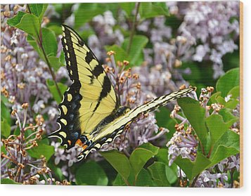 Swallowtail On Lilacs Wood Print