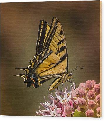 Swallowtail On Milkweed Wood Print by Janis Knight
