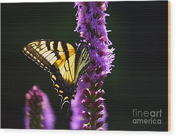 Swallowtail Tail Butterfly  Wood Print