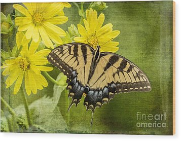 Wood Print featuring the photograph Swallowtail by Vicki DeVico