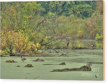Swamp Birds Wood Print by Deborah Smolinske
