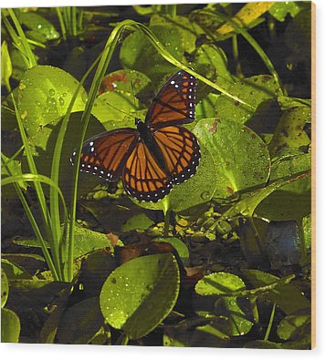 Wood Print featuring the photograph Swamp Butterfly by Silke Brubaker